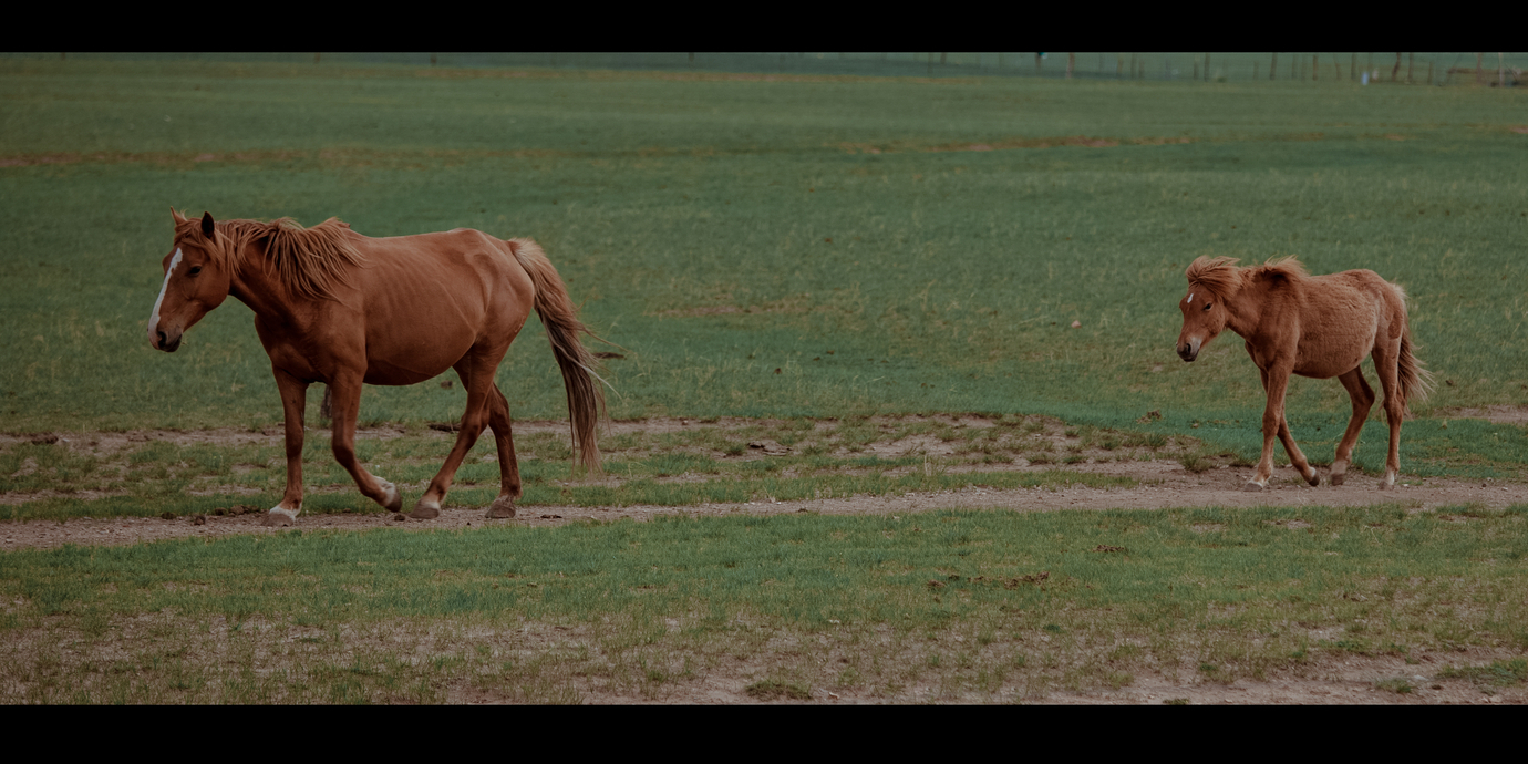 一路向北,国境以东——自驾阿尔山,草原七日游