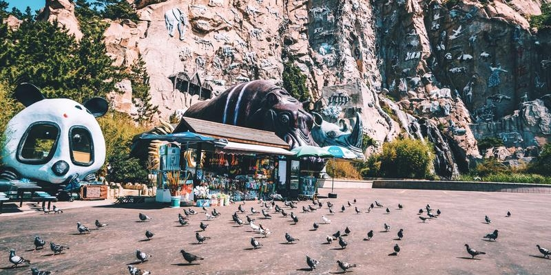 逛神雕山野生动物世界 去海驴岛看漫天的鸥鹭