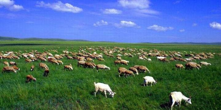 夏季的草原真的有一种治愈心里辽阔之美