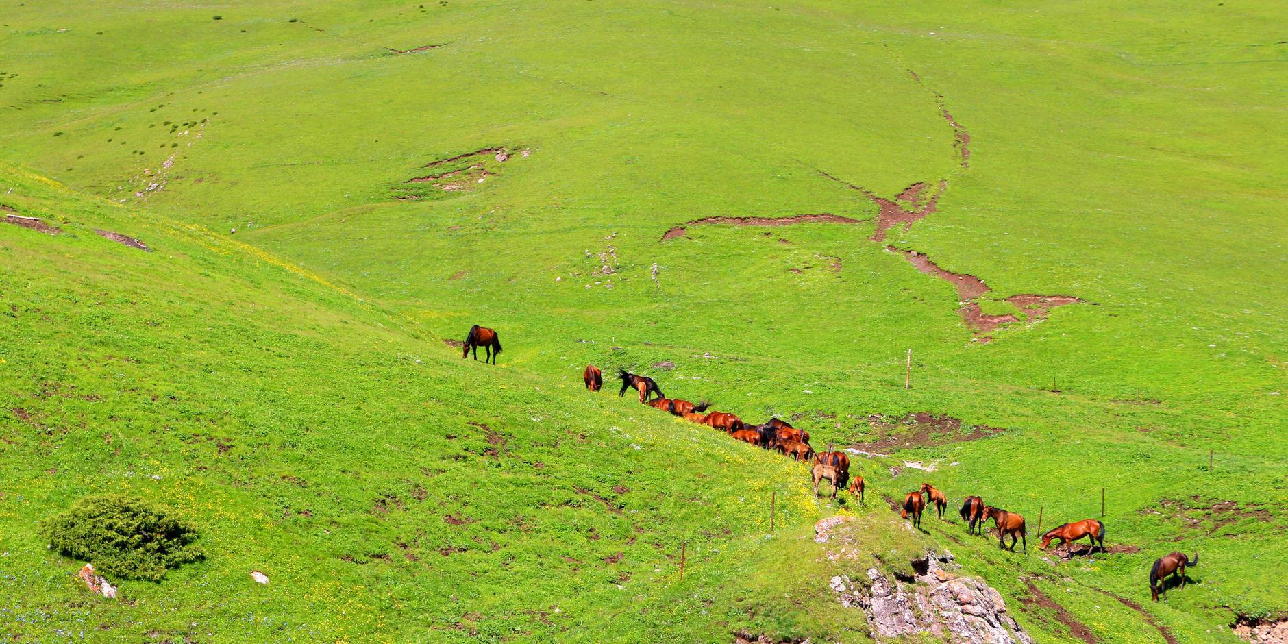 经过伊昭公路遇到转场牧民和高山牧场
