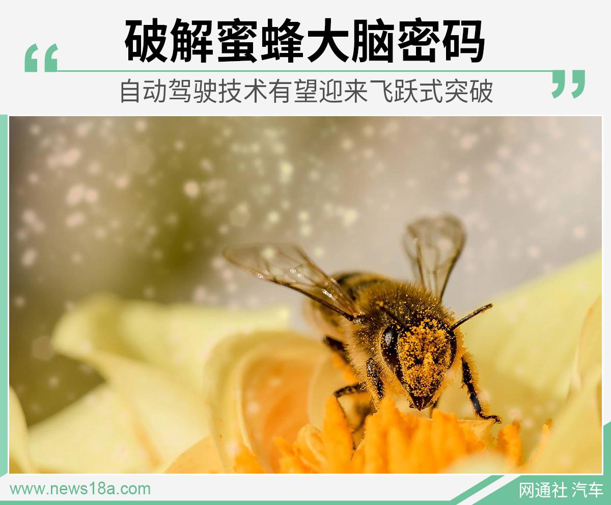 【推荐】破解蜜蜂大脑密码自动驾驶技术有望迎来飞跃